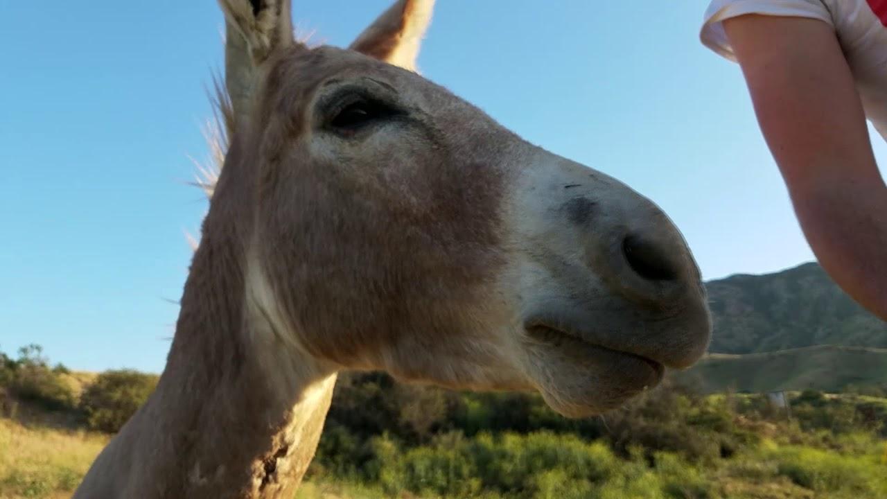 Donkeys at Olive Dell Ranch Nudist Resort (Colton, California)