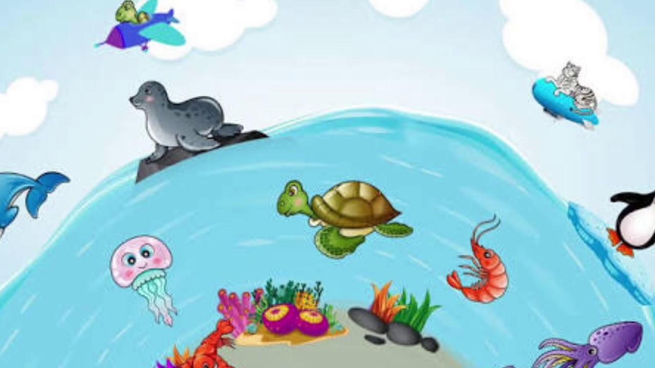Deniz Altında Yaşayan Canlılar Youtube