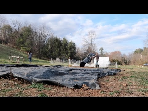 Using a tarp to kill weeds and grass