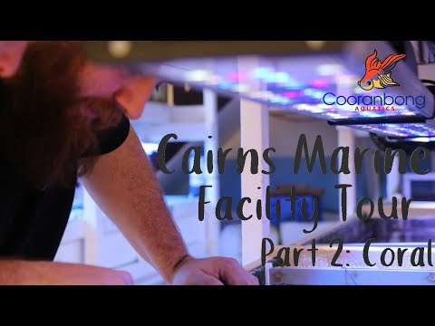 Cairns Marine Tour Part Two CORAL | Largest Marine Collector In Australia