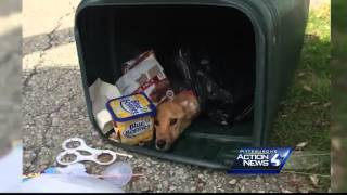 Woman Takes Plea Deal After Dog Left In Trash