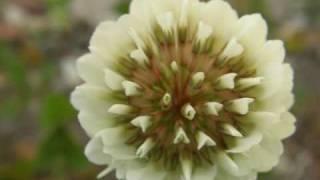 Flores de Asturias - Herbario 2008-2009