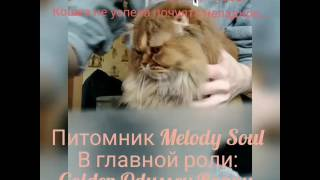 Как дать коту/кошке таблетку или жидкое лекарство без насилия