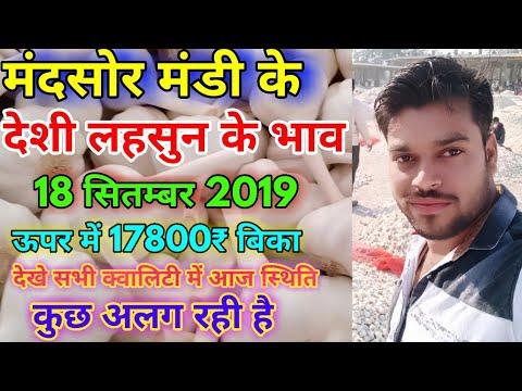 Garlic Price Today || Mandsor Mandi Garlic Price Today || Mandsor Mandi Lahsun Bhav 18-09-2019