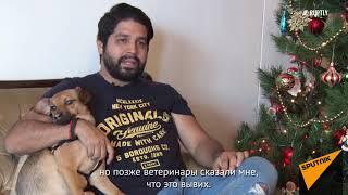 Память о ЧМ-2018: Как собака Бусинка из Адлера нашла дом в Перу