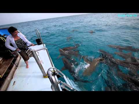 BAHAMAS: Shark School and Dolphin Dream (Dr. Erich Ritter)