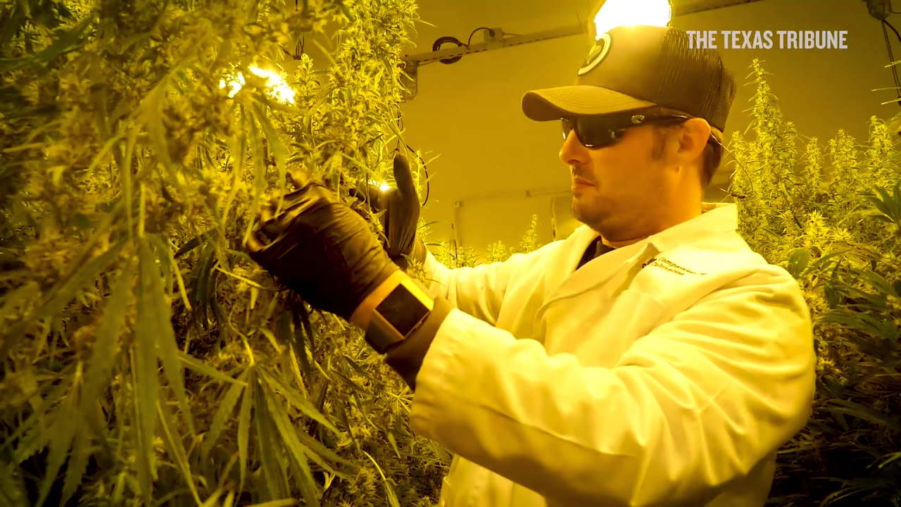 Texas medical cannabis cultivator and dispensary has first