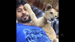 LIVING WITH LIONS - Pet Wild Animals - Wealthy Lifestyle of Rich Arabs