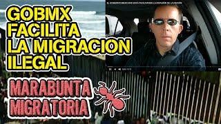 EL GOBIERNO MEXICANO  ESTÁ FACILITANDO LA INVASIÓN DE LA NACIÓN thumbnail