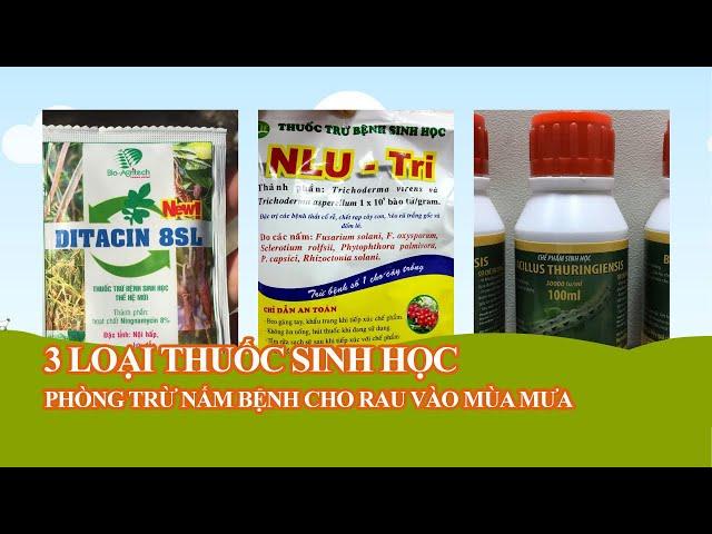 Các loại thuốc sinh học phòng trị nấm bệnh và sâu trên cây rau mùa mưa