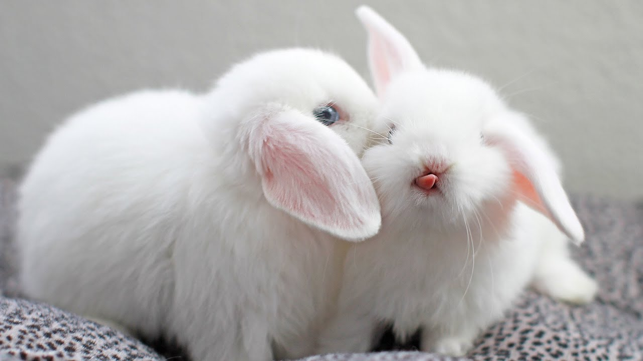 Cute White Baby Rabbits Wallpapers Omg Cute Bunny Moments 1080p Hd Youtube