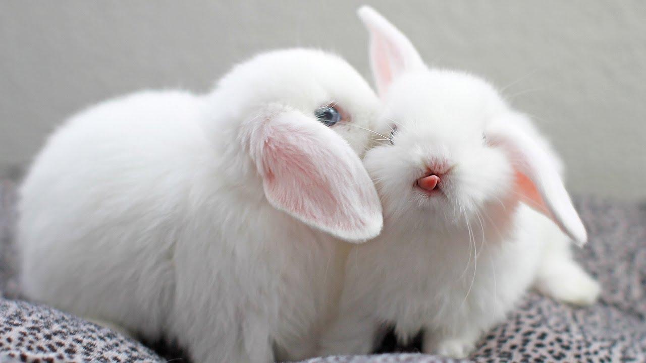 Cute Rabbits OMG CUTE Bunny ...