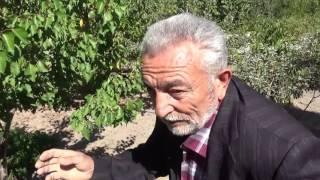 Kayseri - Verimsiz Toprağın Verimli Hale Getirilmesi - Ceviz - Kaysı - Elma - Armut Ağacı Bakımı