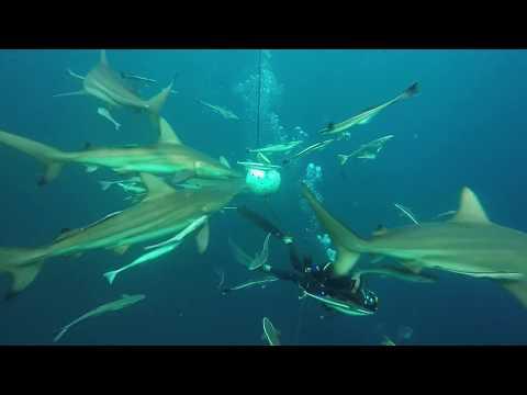 Baited shark dive Umkomaas South Africa