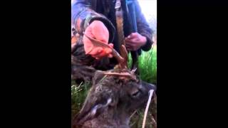 CHRIS GOOD ROEBUCK WITH SCOTTISH DEER MANAGEMENT SERVICE