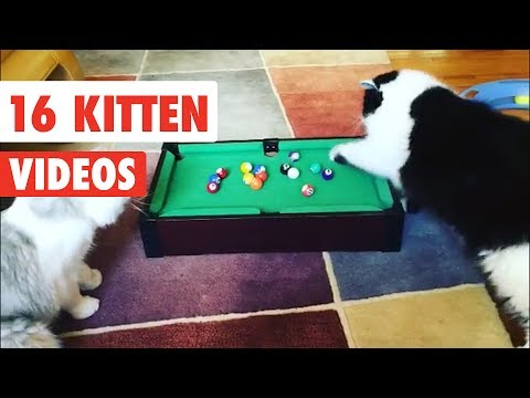 16 Funny Cats | Funny Cat Video Compilation 2017