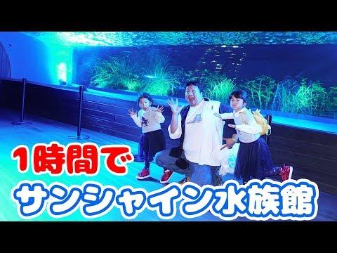 ●普段遊び●1時間でサンシャイン水族館を回った!!めっちゃ楽しかった♡まーちゃん【6歳】おーちゃん【4歳】#627