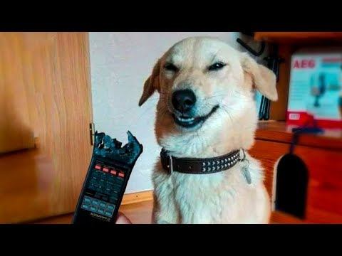 Funniest  Dogs And Cats - Try Not To Laugh - Funny Pet Animals' Life