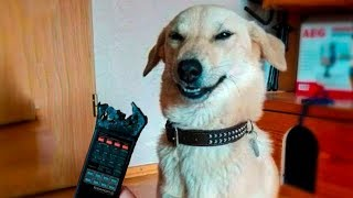 Download 🤣 Funniest 🐶 Dogs And 😻Cats - Try Not To Laugh - Funny Pet Animals' Life 😇 Mp3 and Videos