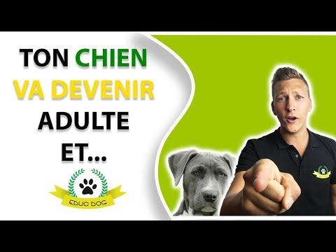 Bain Pour Chien - 10 techniques à savoir - Education canine - Rapidement