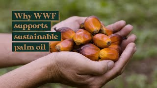 Why WWF supports sustainable palm oil