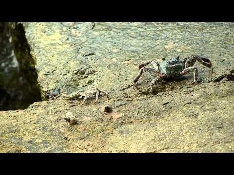 Dirtiest Crabs - Philippines