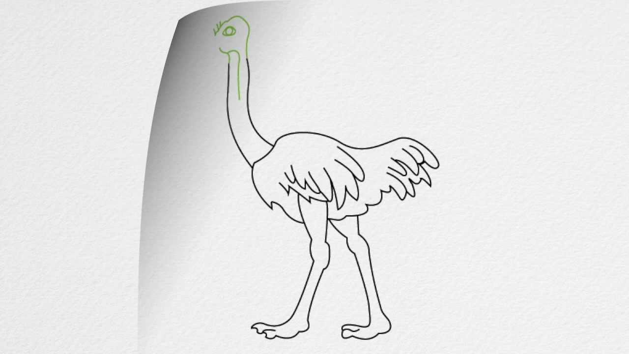 how to draw an ostrich step by step youtube