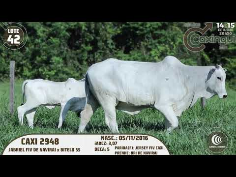 LOTE 42   CAXI 2948