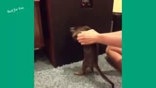 Funny Cats Vine Compilation September 2015