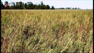 Superweeds - Das Unkraut aus der Hölle! Dank Monsanto
