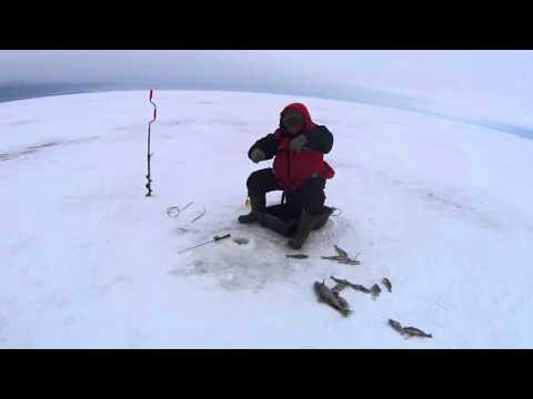 зимняя ловля сига на онежском озере