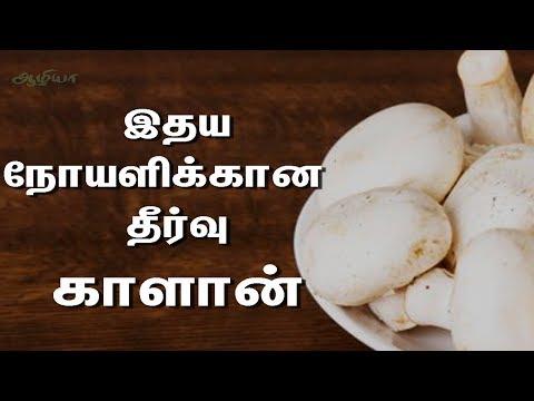 காளான்   Health Benefits Of Mushroom In Tamil