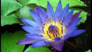 Imee Ooi - The Divine Mantra of Bodhisattva Avalokitesvara (觀音靈感真言)(Sanskrit)