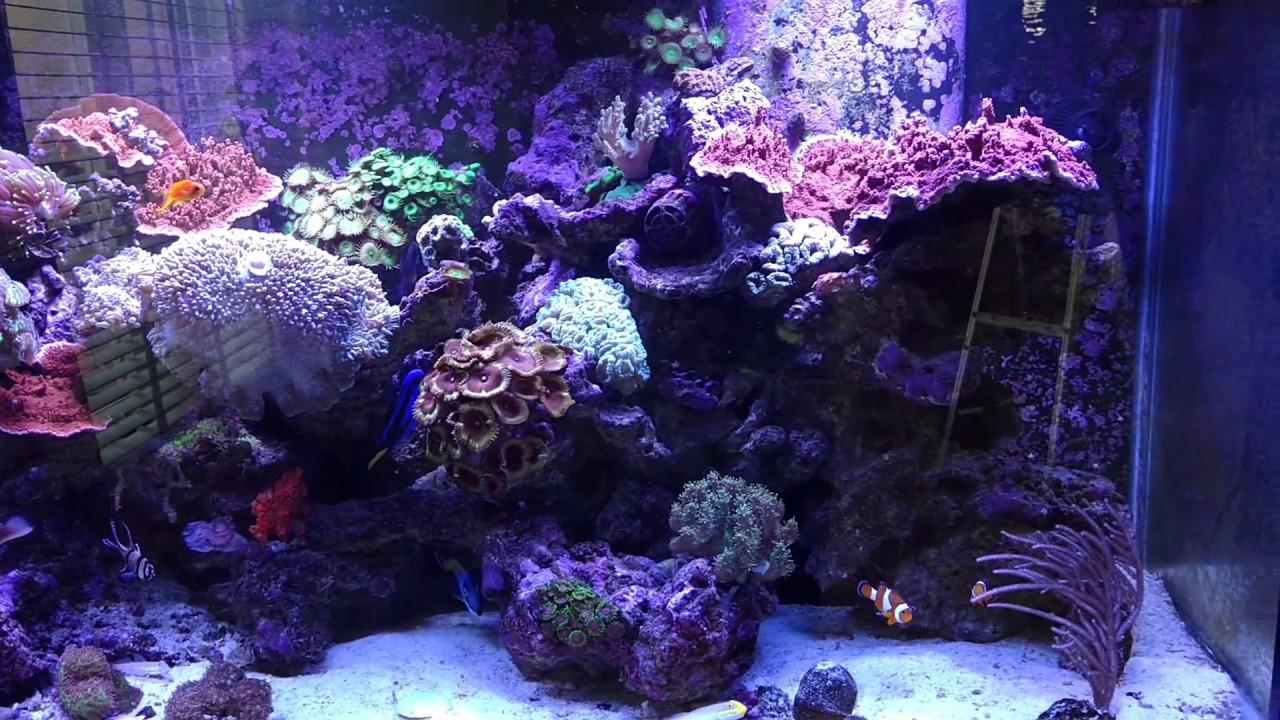 Champion Aquariums 220 Gallon Living Reef Aquarium