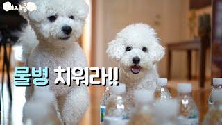 비숑들의 물병 미로 찾기?Puppies water bo…