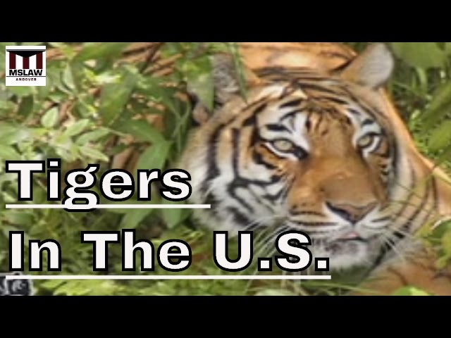 Free Tony the Truck Stop Tiger - Big Cat Rescue 4a350ee7b30c