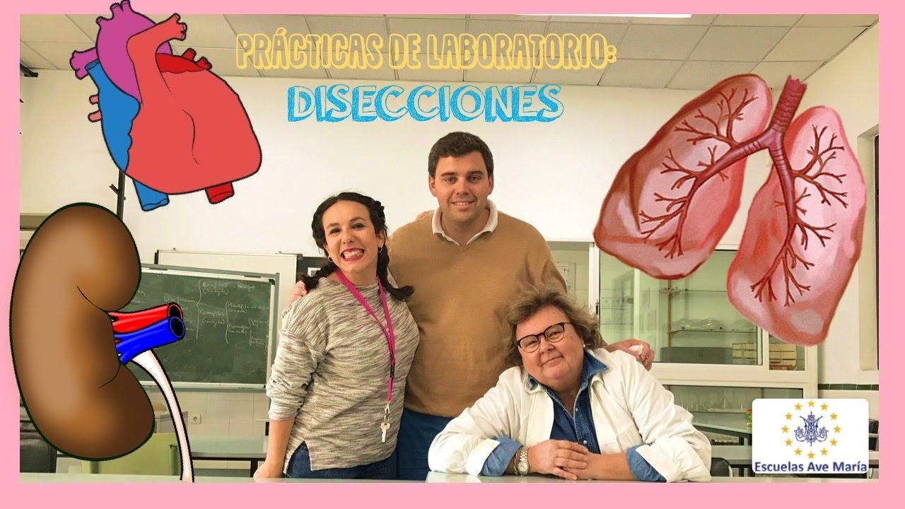PRÁCTICAS DE LABORATORIO: Disección pulmón, riñón y corazón. Escuelas Ave María - Bio[ESO]sfera