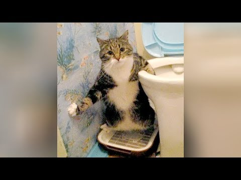 WEIRD CATS will make you CRY WITH LAUGHTER! - Super FUNNY CATS