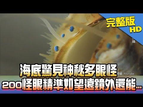 【完整版】海底驚見神秘多眼怪 200怪眼精準如望遠鏡外還能...2017.12.01《新聞龍捲風》
