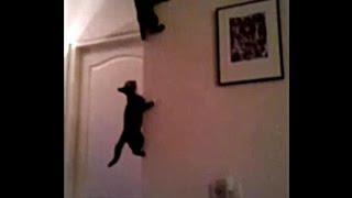 Молодые коты пауки))