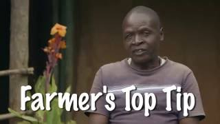 Shamba Shape Up Sn 06 - Ep 24 Cows, Soil Testing, Supplements (English)