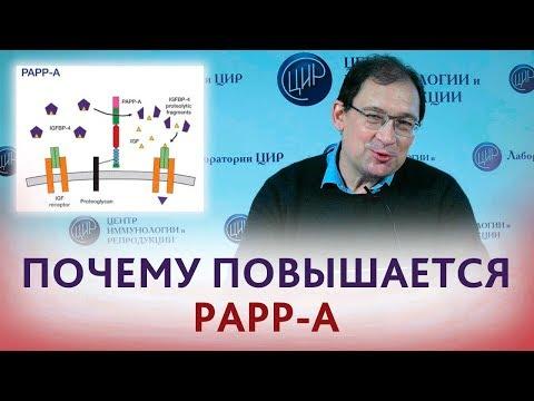 Повышен PAPP-A. Что значит, если повышен ПАПП-А? Отвечает Гузов И.И.