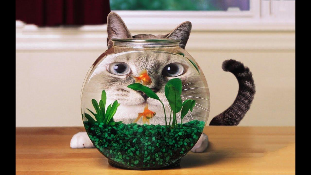 Фото смешных котов кошек котят