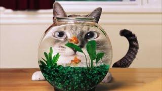 Прикольные коты, кошки и котята!!! Подборка СМЕШНЫХ фото котов №1! Смешные, забавные и веселые! Funn