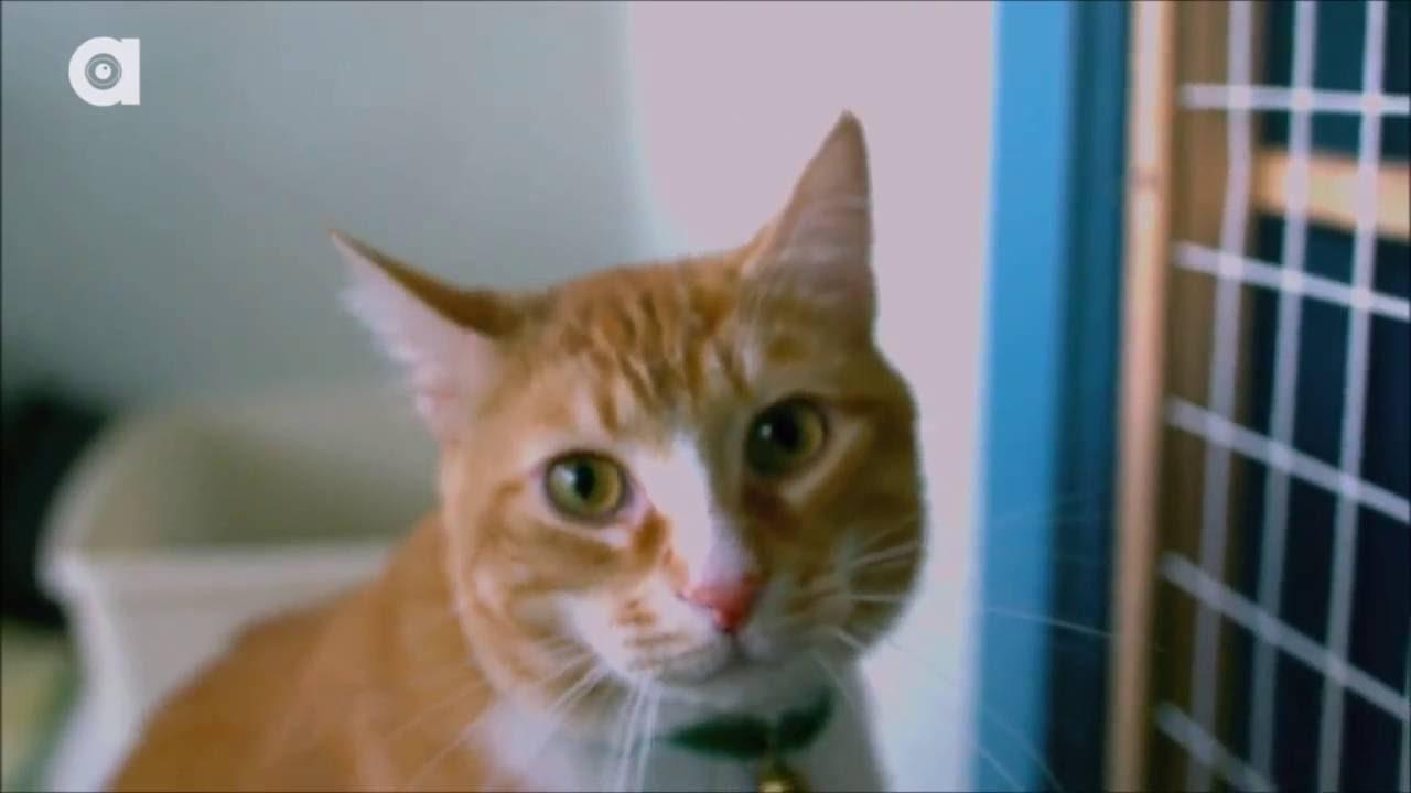 applaws cat food recall
