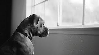 Собака постоянно смотрела в окно. Когда хозяйка поняла, почему, её охватили эмоции!
