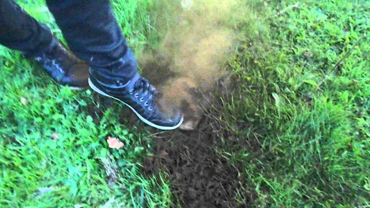Explosion vesse de loup youtube - Cuisiner vesse de loup ...