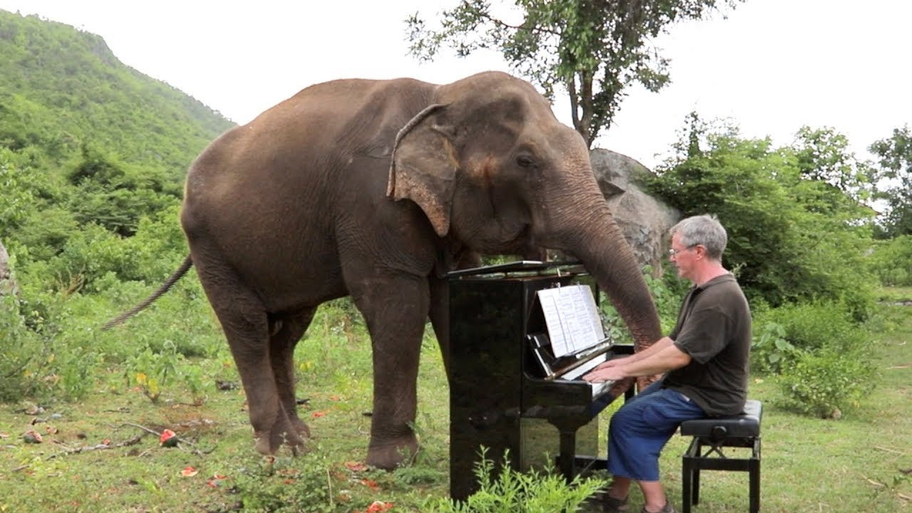 Beethoven On Piano For Romsai The Elephant Youtube