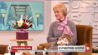 У студії власниця котів Лариса Іваненко породи селкірк-рекс та її улюбленці