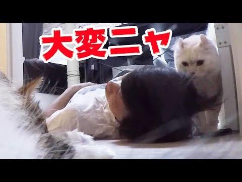 飼い主と兄が倒れたら猫はどっちを助けるのか?